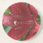 Red Asiatic Lilly Beverage Coaster