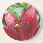 Red Asiatic Lily With Buds Beverage Coasters