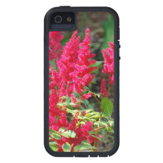 Red Astilbe Flowers iPhone 5 Covers