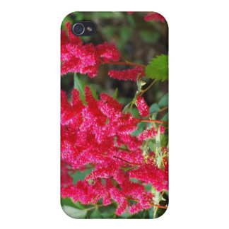 Red Astilbe Flowers iPhone 4 Case