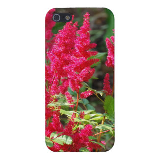 Red Astilbe Flowers iPhone 5 Cases