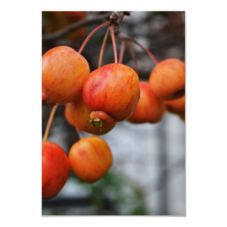 Red Autumn Apples Card