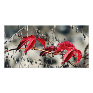 Red autumn Card