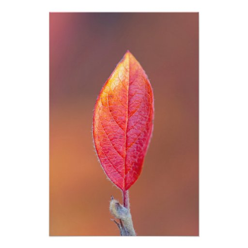 Red autumn leaf art photo