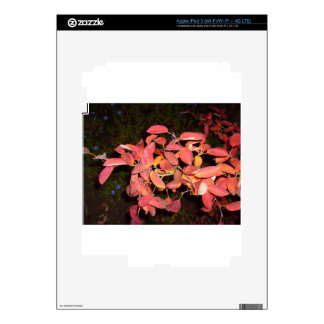 RED AUTUMN LEAVES BRANCH DARK SKINS FOR iPad 3