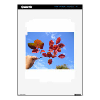 RED AUTUMN LEAVES BRANCH IN HAND iPad 3 SKINS