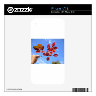 RED AUTUMN LEAVES BRANCH IN HAND SKINS FOR iPhone 4