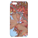 red autumn leaves cover for iPhone 5C