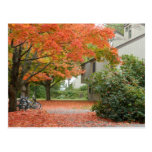 Red Autumn Leaves Falling Post Cards