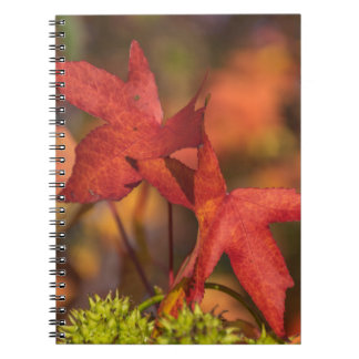 Red autumn leaves notebook