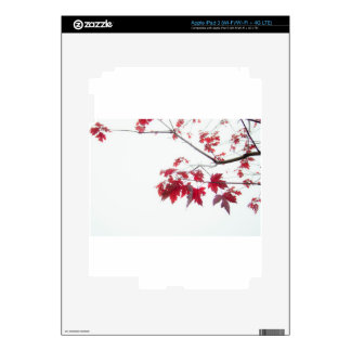 red autumn leaves on a branch iPad 3 decal