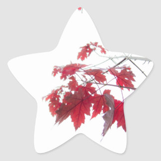 red autumn leaves on a branch sticker