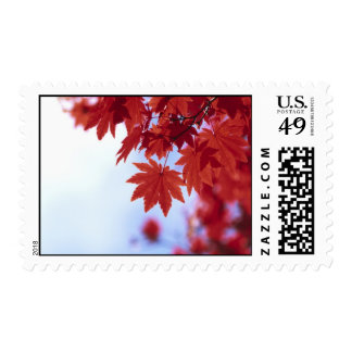 Red Autumn Leaves Stamps