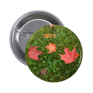 Red Autumn Maple Leaves for Canada Day Button