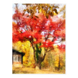 Red Autumn Sycamore Post Card