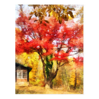 Red Autumn Sycamore Postcard