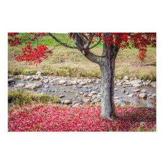 Red Autumn Tree Art Photo