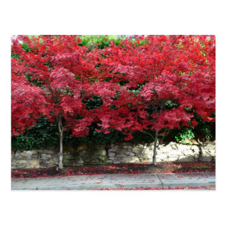 Red Autumn Trees Postcard