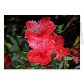 Red Azaleas Card