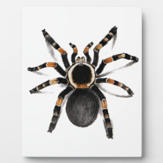 Red Banded Tarantula Spider Plaque