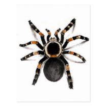 Red Banded Tarantula Spider Postcard