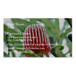 Red Banksia flower Business Cards