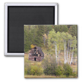 Red Barn and Birch Trees 2 Inch Square Magnet