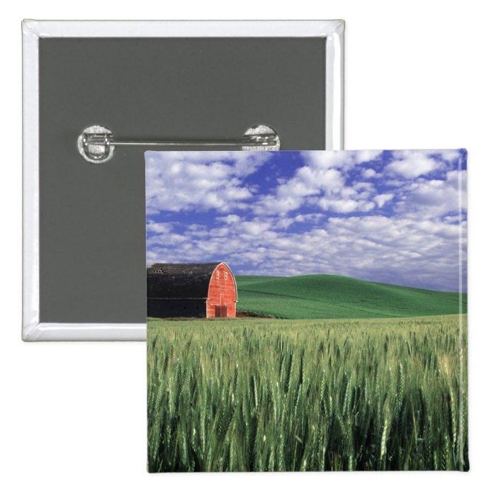 Red barn in wheat & barley field in Whitman Pinback Button