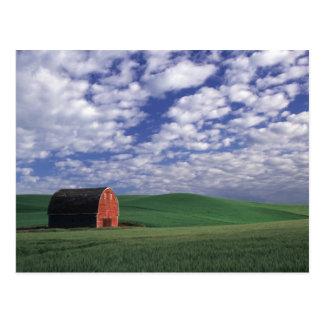 Red barn in wheat & barley field in Whitman Postcard