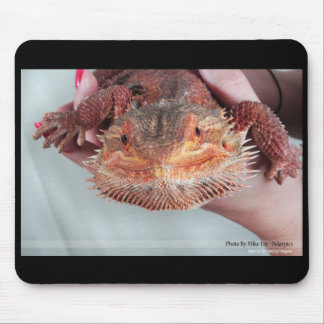 Red bearded dragon mouse pad