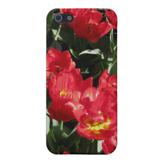 Red Beauties Covers For iPhone 5