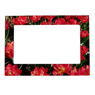 Red Beauties Magnetic Picture Frame