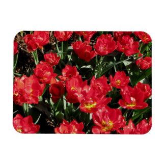 Red Beauties Rectangular Photo Magnet