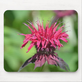 Red Bee Balm Mouse Pad