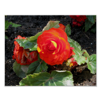red begonia flower print
