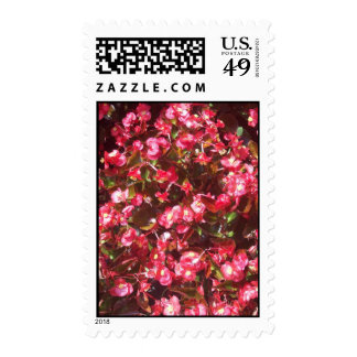 Red Begonia Postage Stamps Postage