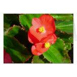 Red Begonias Card