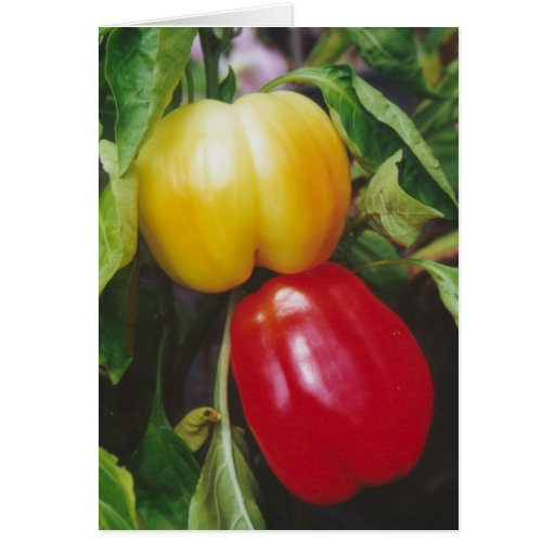 Red Bell Peppers Ripen on Plant with Leaves Greeting Card