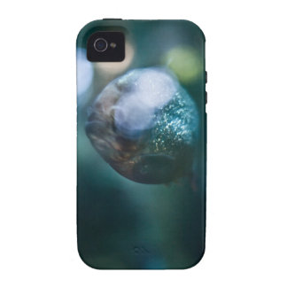 Red Bellied Piranha iPhone 4/4S Cases