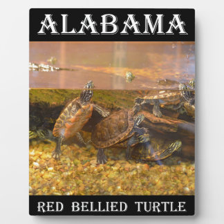 Red Bellied Turtle (Alabama) Plaque