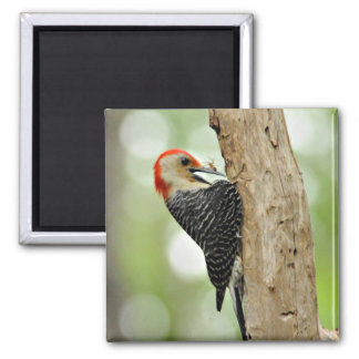 Red-Bellied Woodpecker 2 Inch Square Magnet