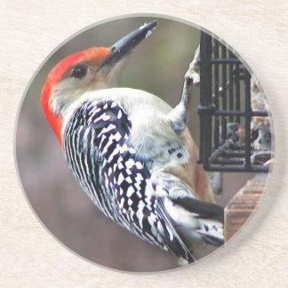 Red-bellied Woodpecker Drink Coaster
