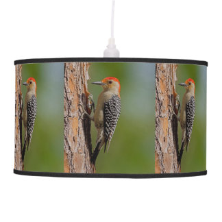 Red-bellied Woodpecker Hanging Lamp