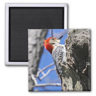 Red Bellied Woodpecker Magnet