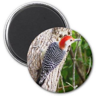 Red Bellied Woodpecker Magnet 2