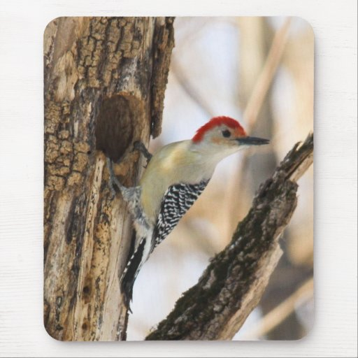 Red-bellied Woodpecker Mouse Pad