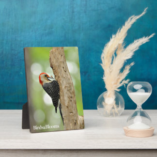 Red-Bellied Woodpecker Photo Plaques