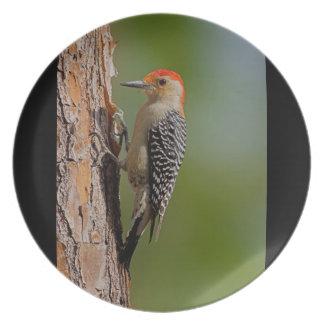 Red-bellied Woodpecker Plate