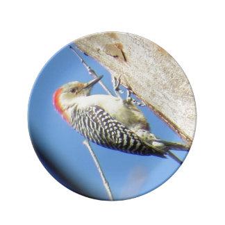 Red-bellied Woodpecker Porcelain Plate