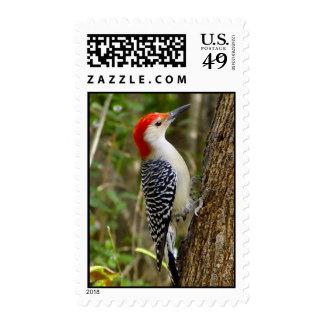 Red Bellied Woodpecker Postage